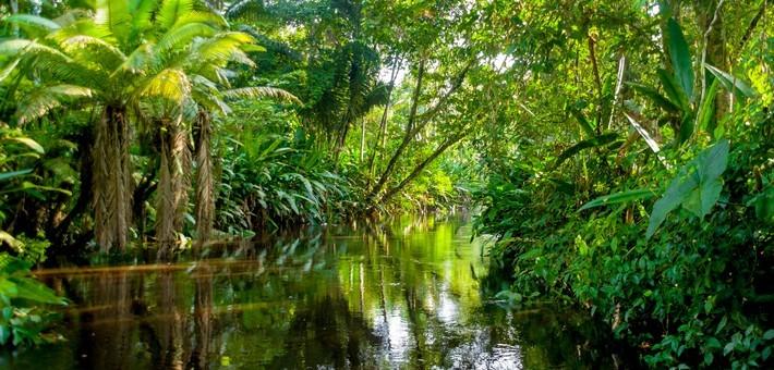 Pachamama : Le lien à la Terre