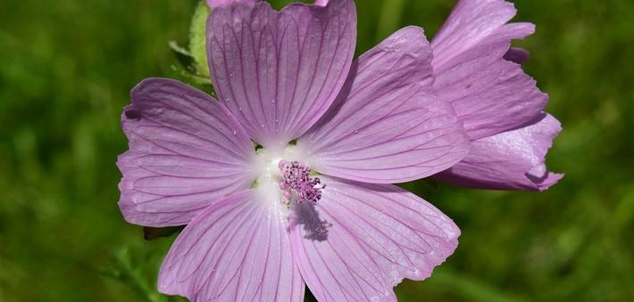 Quelles plantes pour une cure detox des intestins ?