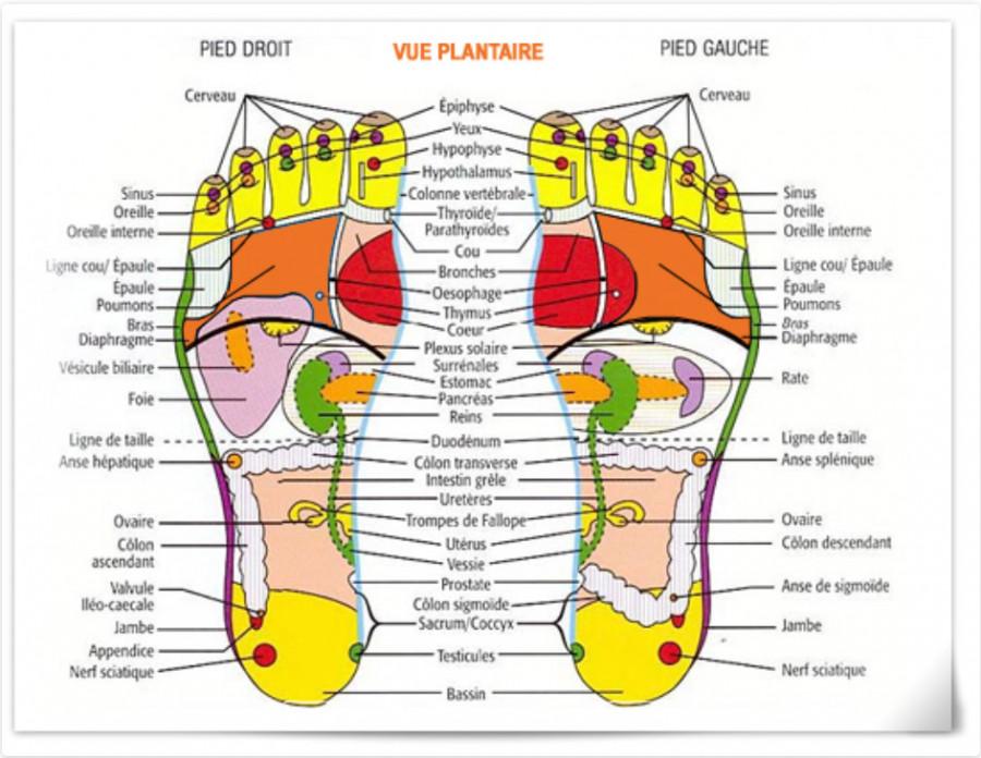 Réflexologie plantaire : la carte des pieds