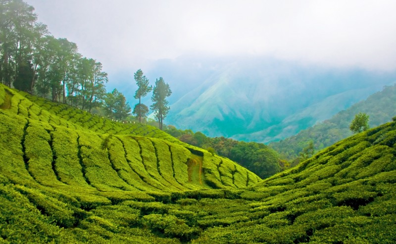 Jour 4. Munnar - Visites - Yoga / relaxation