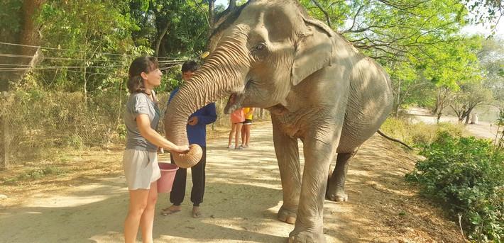 une autre chance lacer dans liquidation à chaud Séjour éco-participatif auprès des éléphants de Thailande ...